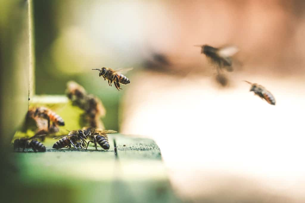 abeilles de la ruche en état de stress